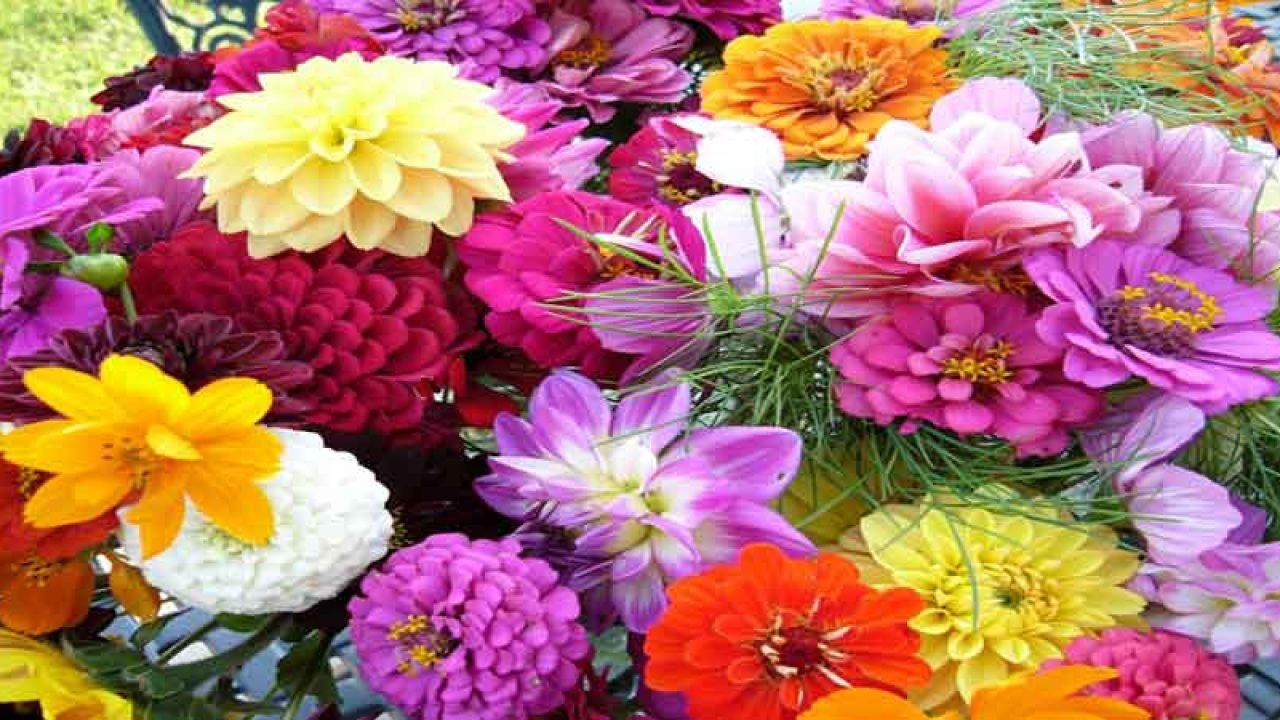 flower status short quotes on flower for facebook whatsapp