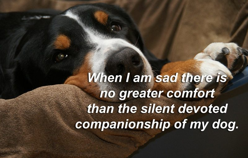 Famous Pet Quotes and Sayings, Cute Status About Animals