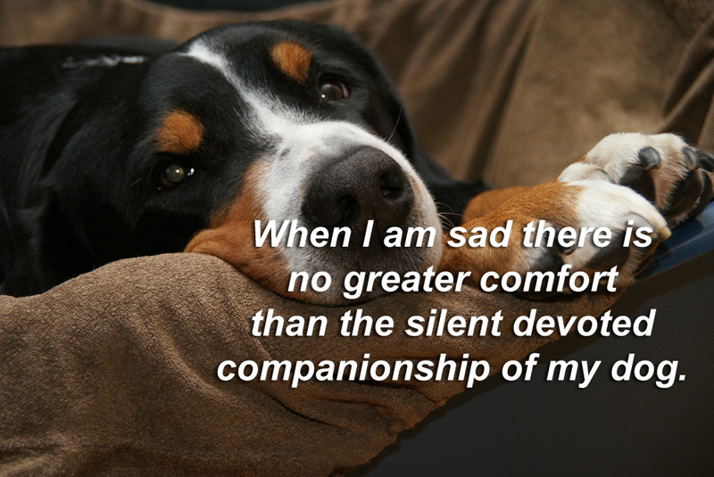 Pet Dog Love Quotes