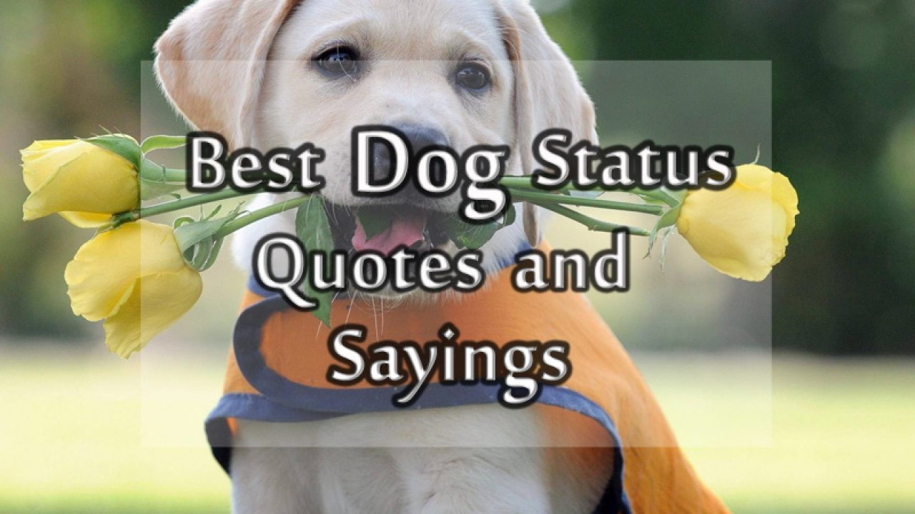 Dog Status, Messages and Quotes about Dog for Facebook and