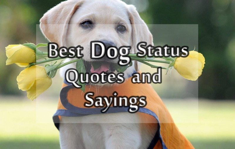 Dog Status, Messages and Quotes about Dog for Facebook and ...