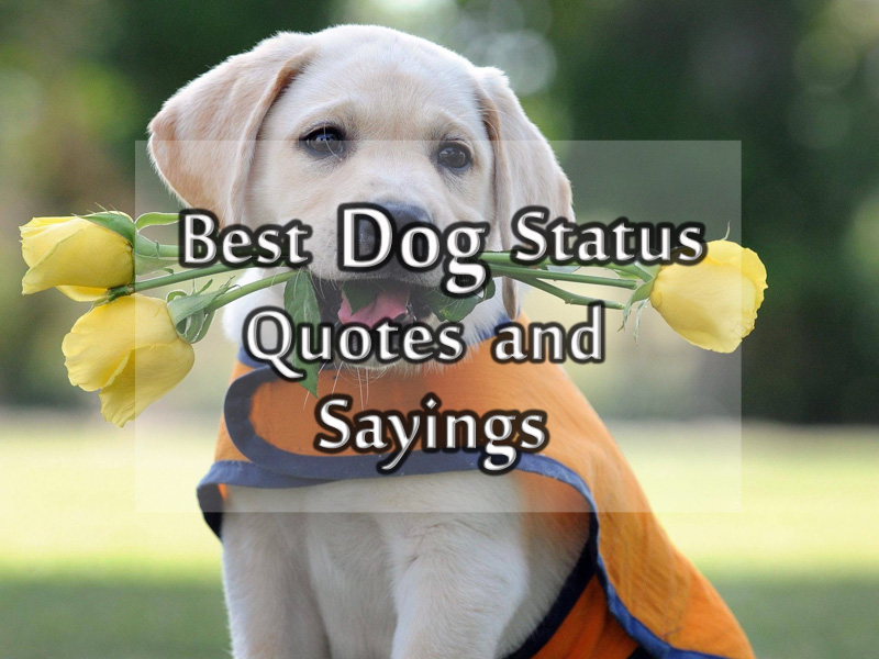 Dog Status Messages And Quotes About Dog For Facebook And Whatsapp