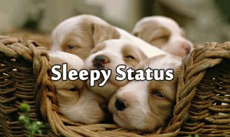 Best Sleepy Status, Sleep Short Quotes and Funny Messages
