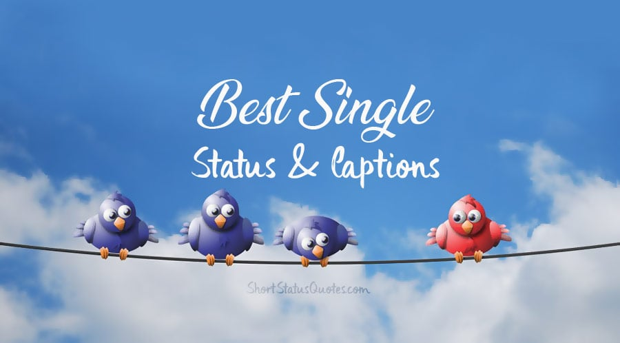 what does single and ready to mingle mean